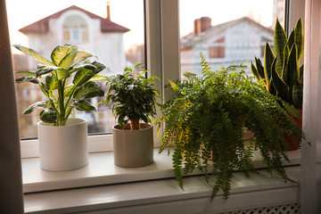 Door stickers Plant Different potted plants on window sill at home