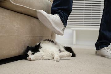 Man kicking cat at home, closeup of leg. Domestic violence against pets