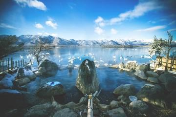 Mesmerizing scenery of swans hanging out in the Lake Kussharo in Hokkaido, Japan during winter