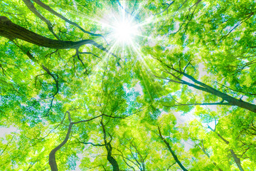 Fototapeten Lime grun 新緑の木と木漏れ日