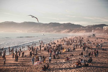 Foto op Plexiglas Cappuccino Seagull Flying Above Crowd At The Beach In Santa Monica California