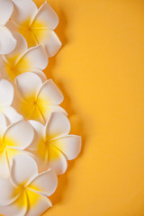 Spoed Fotobehang Frangipani Frangipani plumeria flowers on the yellow background. Copy space. Top view. Tropical composition.