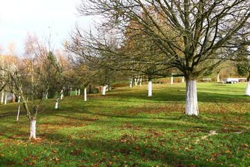 Weiß gekalkte Obstbäume an der Bergkapelle von Illingen (Saar)