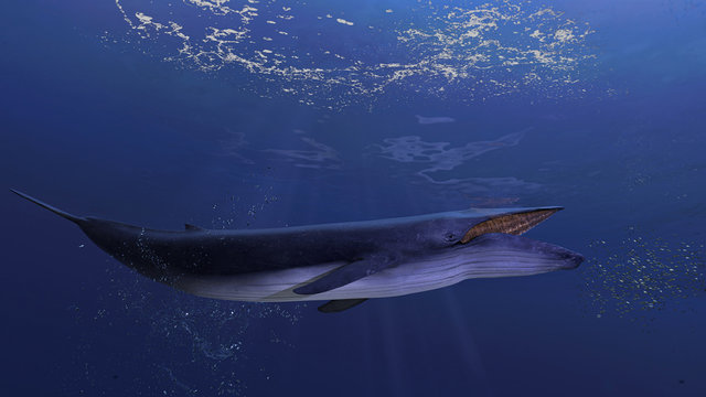 Blue whale underwater close to the sea surface chasing school of fish open mouth side view 3d rendering