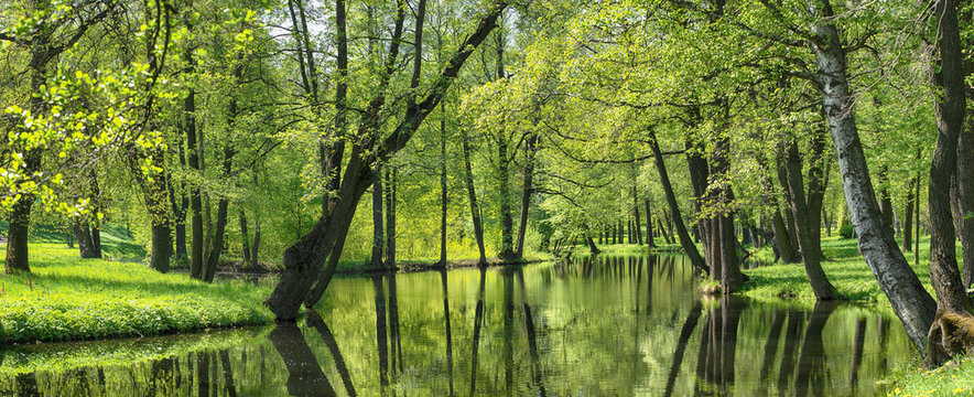 summer landscape, pond and green trees in the park.
