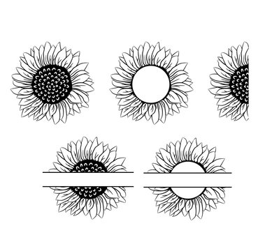 Sunflower vector set collection graphic clipart design