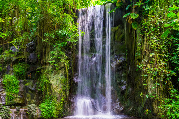 streaming waterfall with many plants in a jungle scenery, beautiful nature background