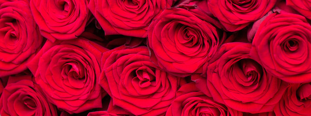Foto auf Leinwand Roses Beautiful Natural red roses background.