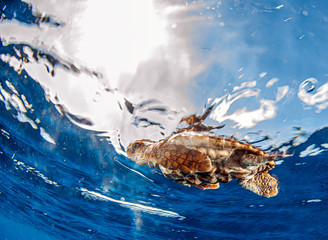 Sea Turtle release at the Bahamas