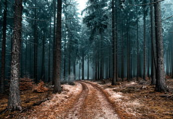Poster de jardin Route dans la forêt Cold Frozen Woodlands