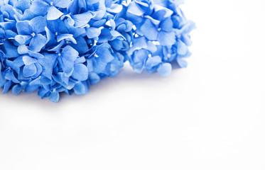 Poster Hydrangea Blue hydrangea flowers