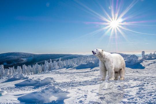 Eisbär in einer Winterlandschaft