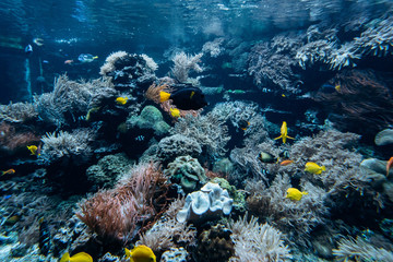 In de dag Koraalriffen Colorful underwater offshore rocky reef with coral and sponges and small tropical fish swimming by in a blue ocean