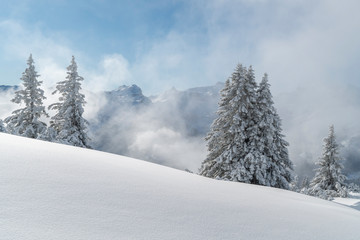 Wall Mural - Verschneite Winterlandschaft