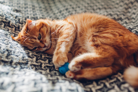Ginger cat sleepng on couch in living room surrounded with cushions