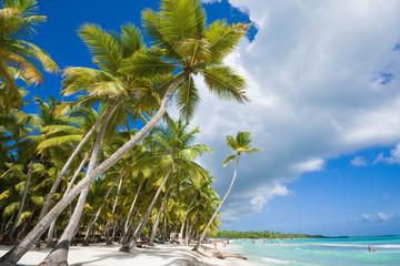 Foto auf Gartenposter Sansibar Inclined palm trees on the coast of Saona island, Dominican Republic