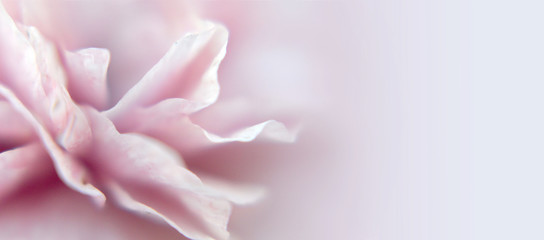 Abstract floral blurred background or banner with copy space