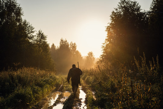 Summer hunting at sunrise. Hunter moving With Shotgun and Looking For Prey.