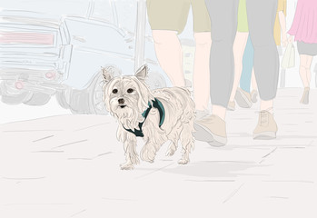 Hand drawn illustration. A cute Yorkshire Terrier (Yorkie) dog goes for a walk on a city street.