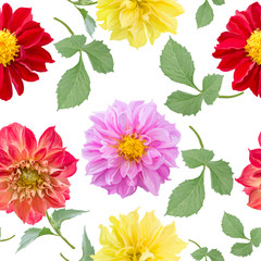 Aluminium Prints Dahlia seamless pattern of dahlia flowers on white