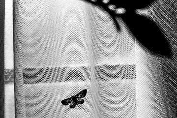 Foto auf AluDibond Schmetterlinge im Grunge Butterfly on the Curtain