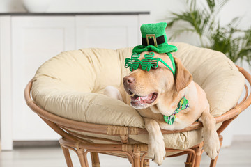Cute dog with green hat at home. St. Patrick's Day celebration Wall mural