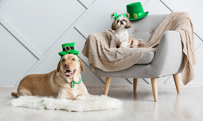 Cute dogs at home. St. Patrick's Day celebration Wall mural