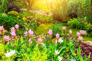 Quiet garden and beautiful blooming flowers.
