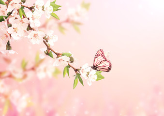 Wall Mural - Beautiful magic spring scene with cherry flowers and butterfly