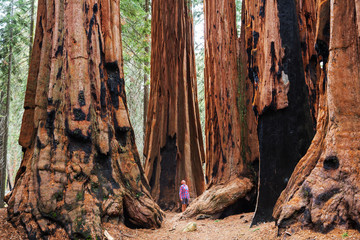 Sequoia Fotomurales