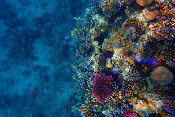 Tuinposter Koraalriffen coral reef in Red Sea