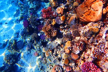 In de dag Koraalriffen coral reef in Red Sea