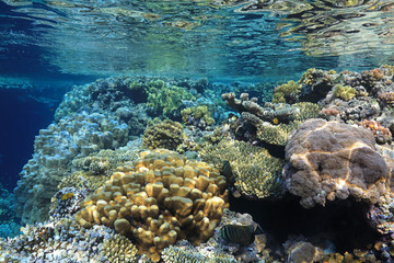 Wall Mural - Coral reef in the Red Sea