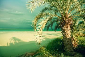Fototapete - Tropical landscape with dramatic sky. Dead sea shore. Palm trees on the beach. Ein Bokek, Israel