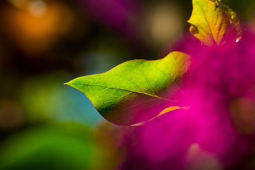 Bokeh Color Love Pinky Greeny Leave Flower