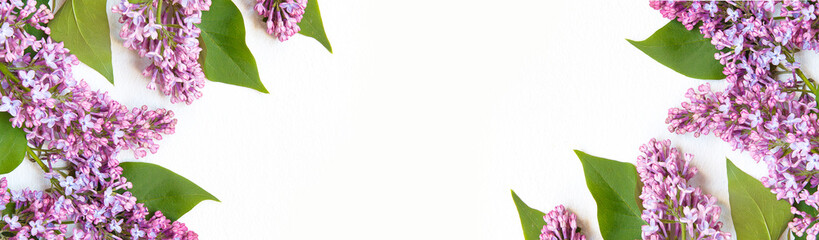 Photo sur Toile Lilac Spring banner. blooming lilac on a white background with copy space Hello spring concept, spring flowering background