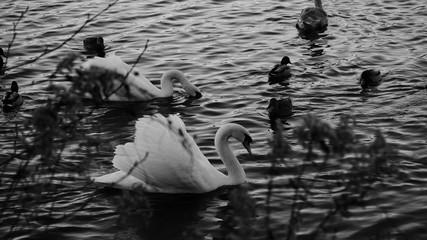 Schwäme und Enten