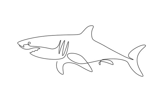 Shark fish in continuous line art drawing style. Minimalist black linear sketch on white background. Vector illustration