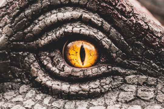 Eye of the dinosaurs with terrifying.