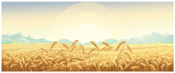 Rural landscape with wheat field with mountains and sunrise on background.