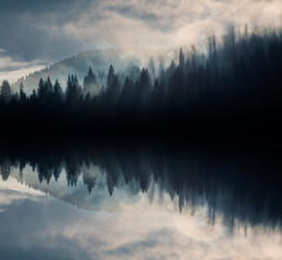 Foto op Plexiglas Zwart Abstract image with foggy forest that looks like sound-waves.