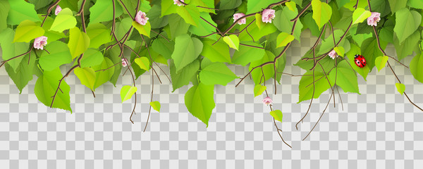Spring border with branches and leaves Wall mural