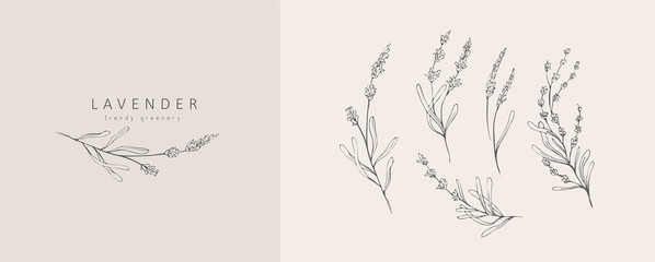 Lavender logo and branch. Hand drawn wedding herb, plant and monogram with elegant leaves for invitation save the date card design. Botanical rustic trendy greenery vector illustration Fototapete