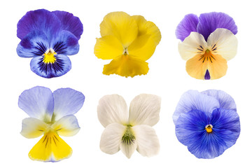 Photo sur Toile Pansies Pansy flowers