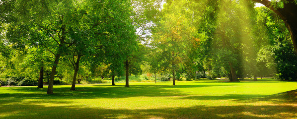 Fotobehang Tuin A summer park with extensive lawns. Wide photo.