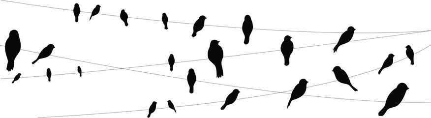 birds city