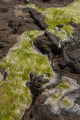 Petrified trees in rocks. Coast South Island. New Zealand