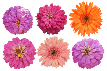 Flowers Isolated on White background with clipping path. There are red, pink, yellow and orange gerbera.