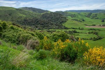 Purakanui Bay. Catlins. South Island New Zealand. Hills and meadows