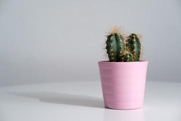 Foto auf AluDibond Kakteen Petit cactus d'intérieur sur fond blanc